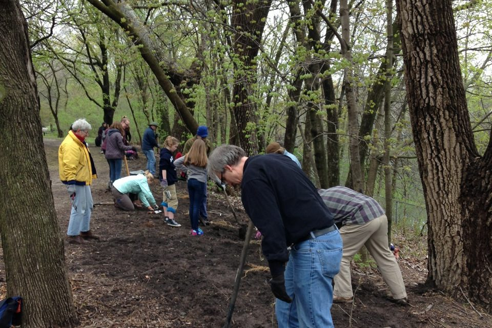 Planting saplings in the arboretum