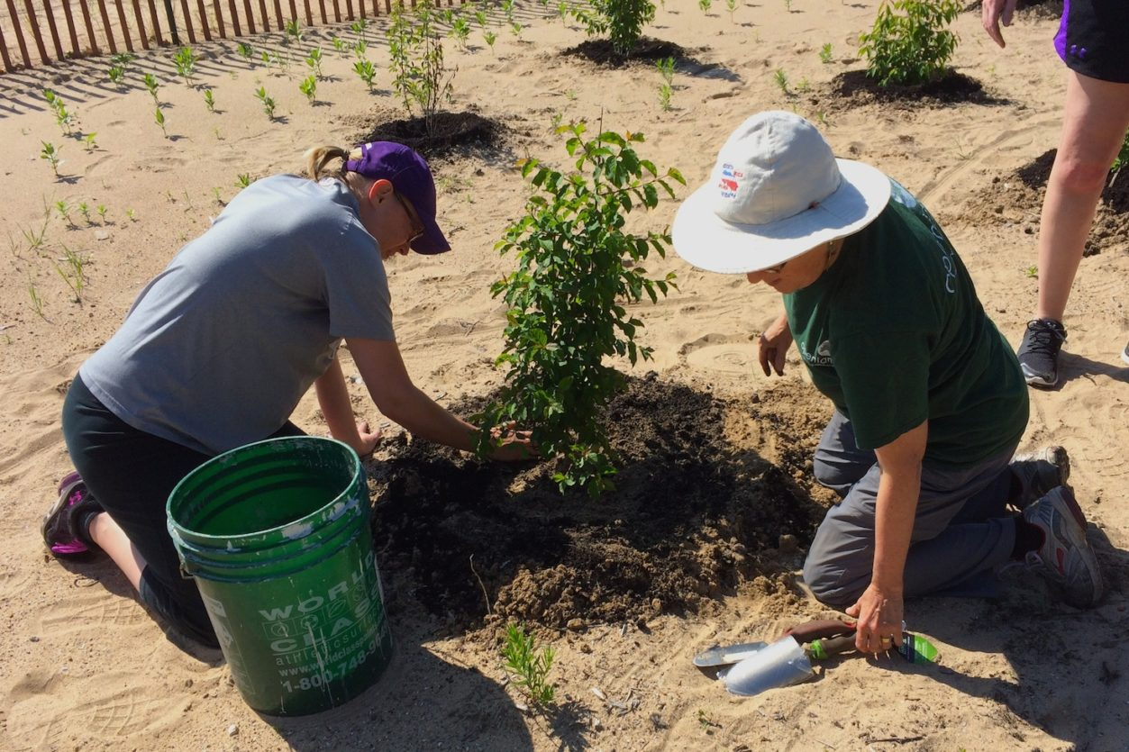 Volunteers help mulch shrubs at the Clark Street Beach Bird Sanctuary
