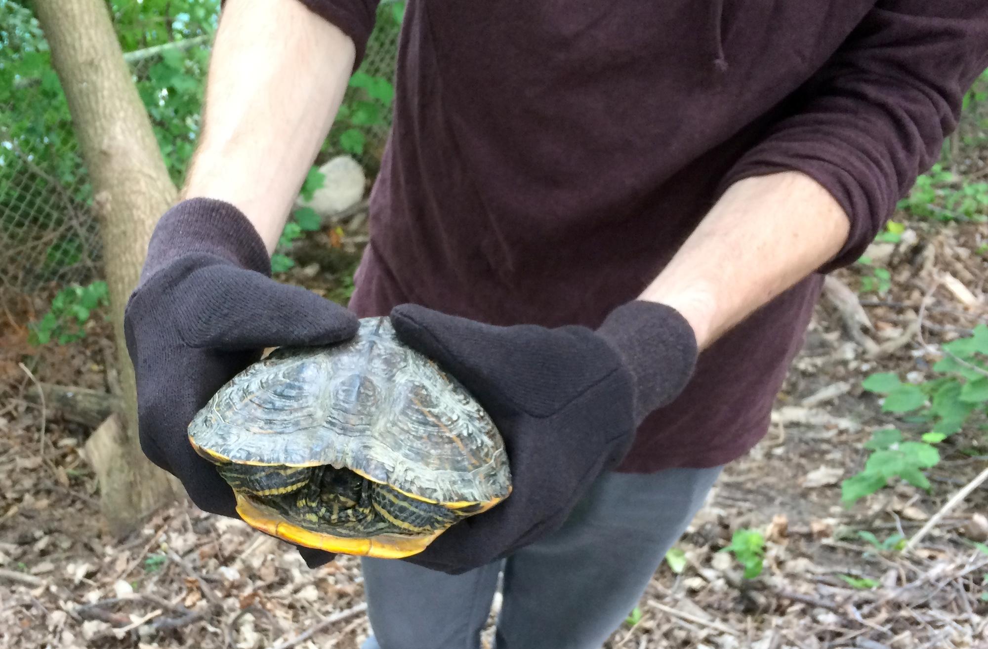 Turtle in the arboretum