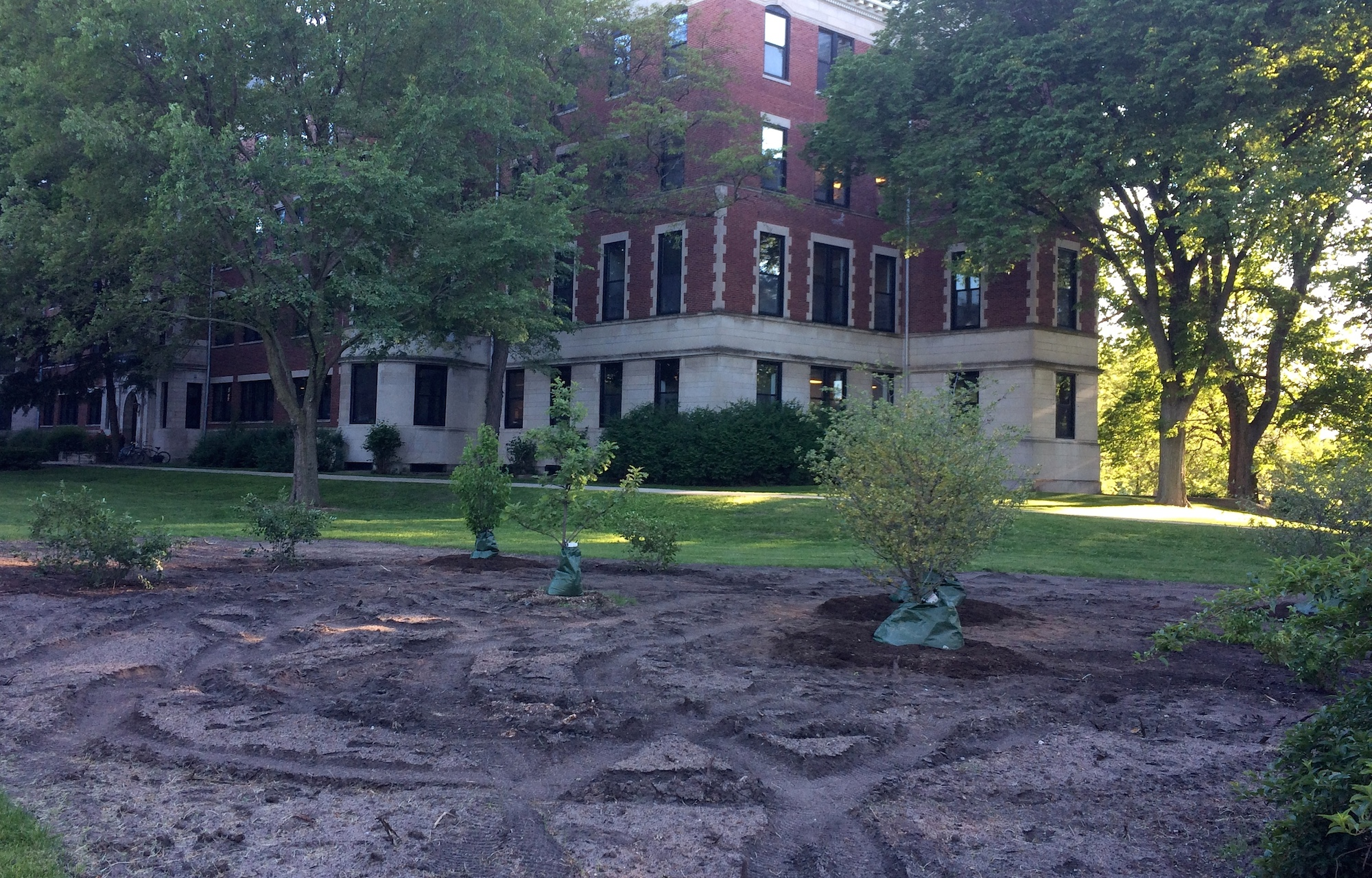 Shrubs and trees have been planted in the Civic Center's bird-friendly garden
