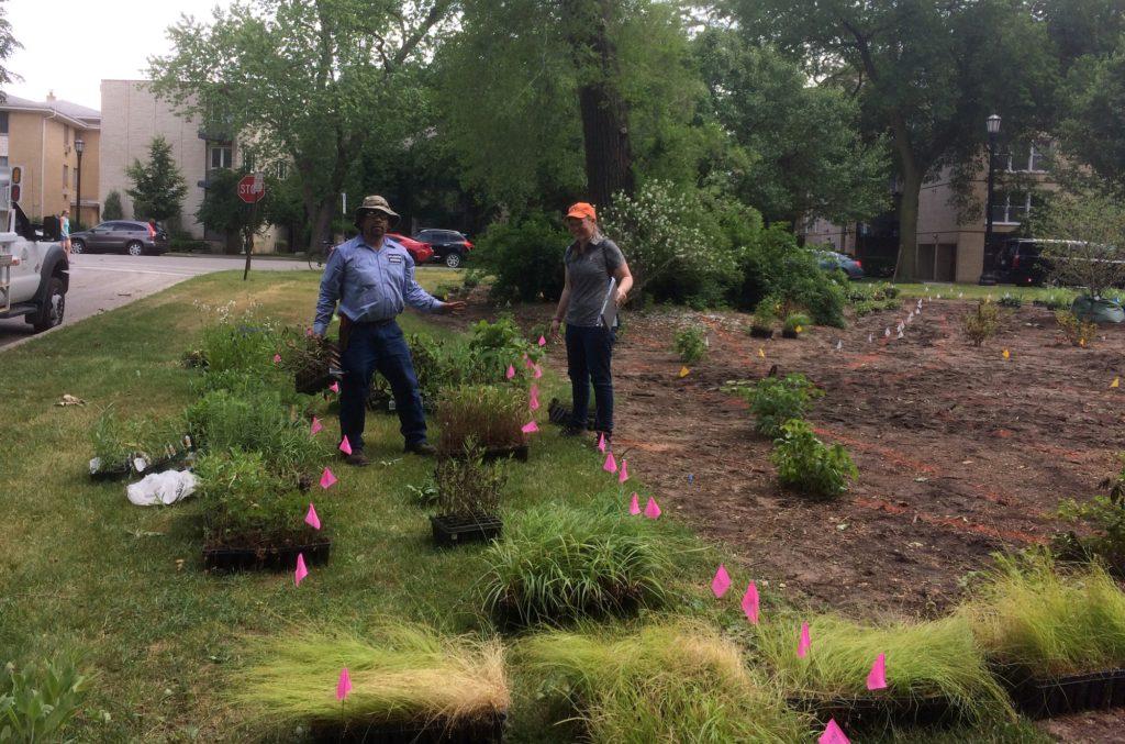 Planting the Civic Center Habitat Garden in June 2017