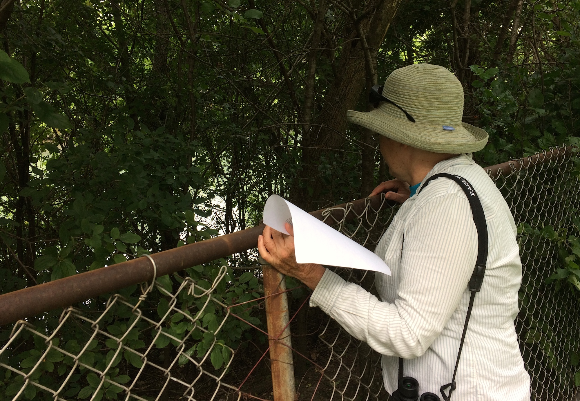Judy Pollock ponders a buckthorn thicket
