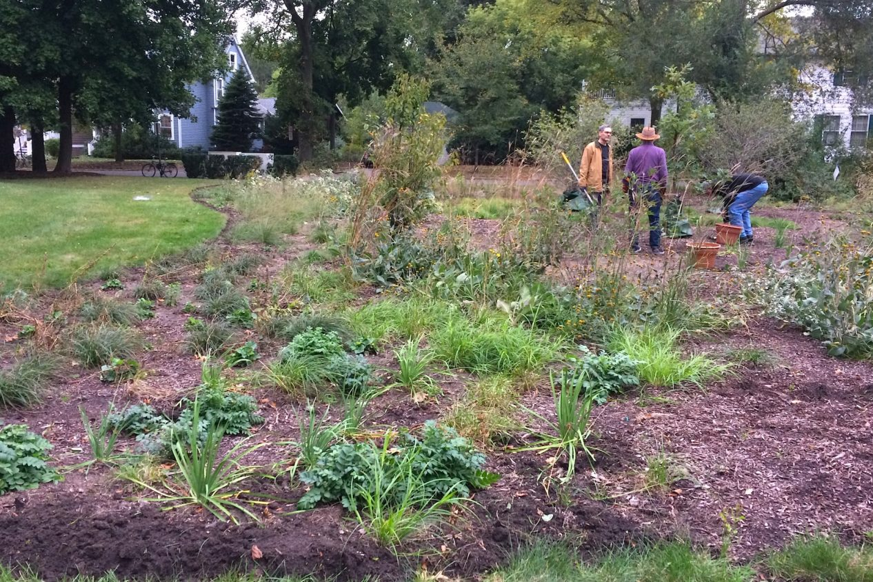 Weeding the Civic Center garden