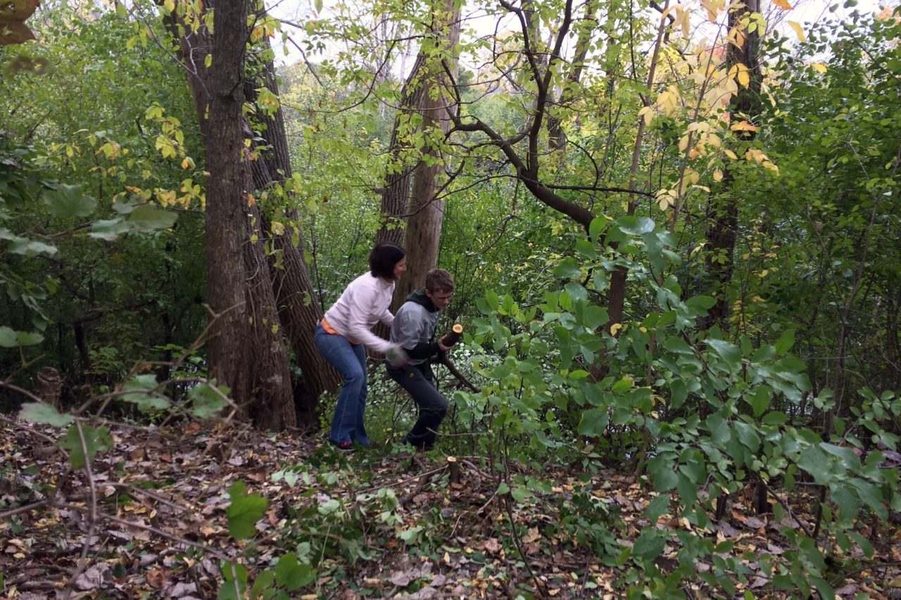 Ellen and Jack Donovan clearing buckthorn in the arboretum