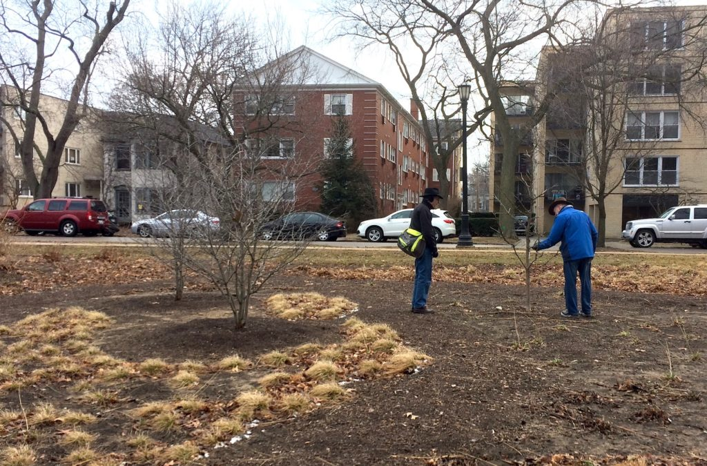 Checking to see how the Civic Center garden weathered the winter