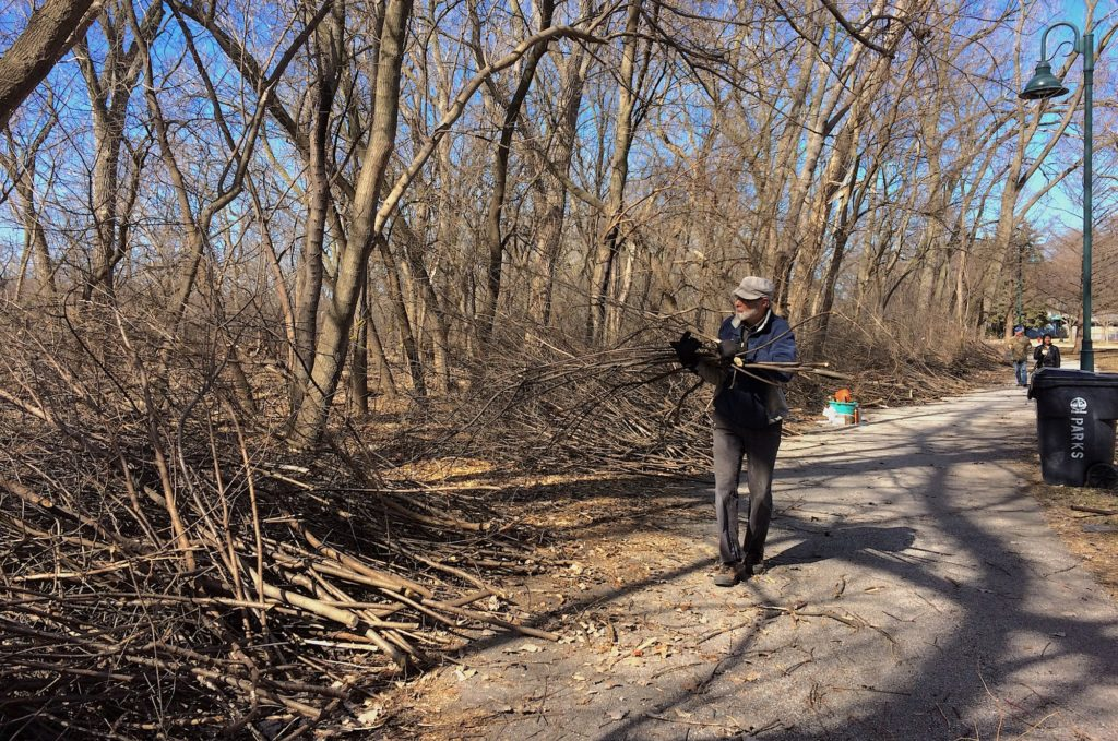 Piling up the buckthorn at another Harbert Park workday