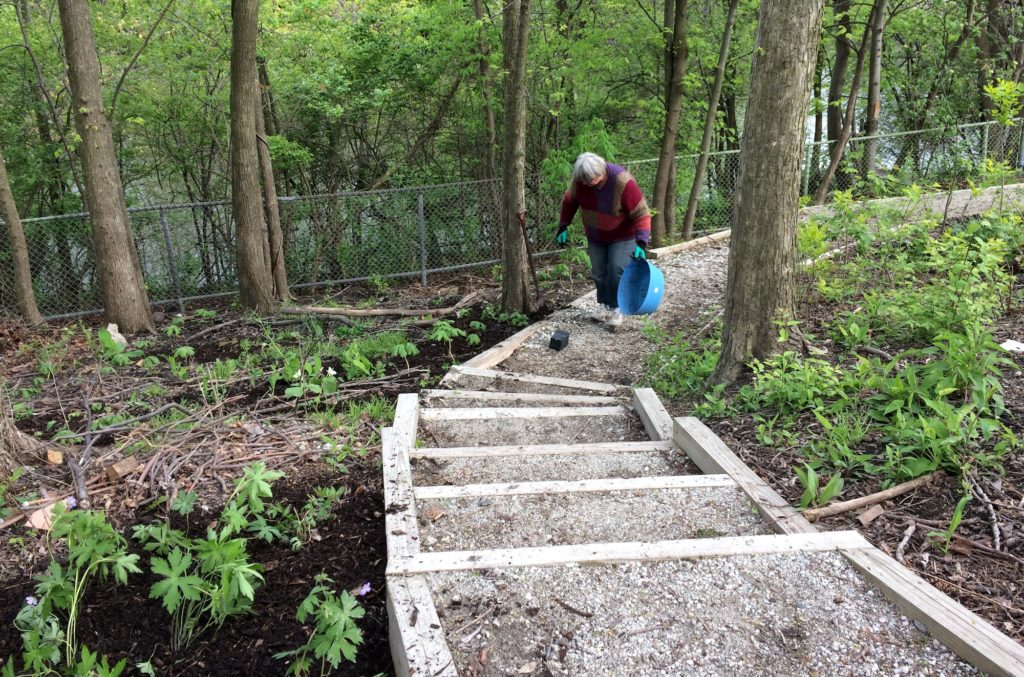 Transplanting wildflowers in May 2017