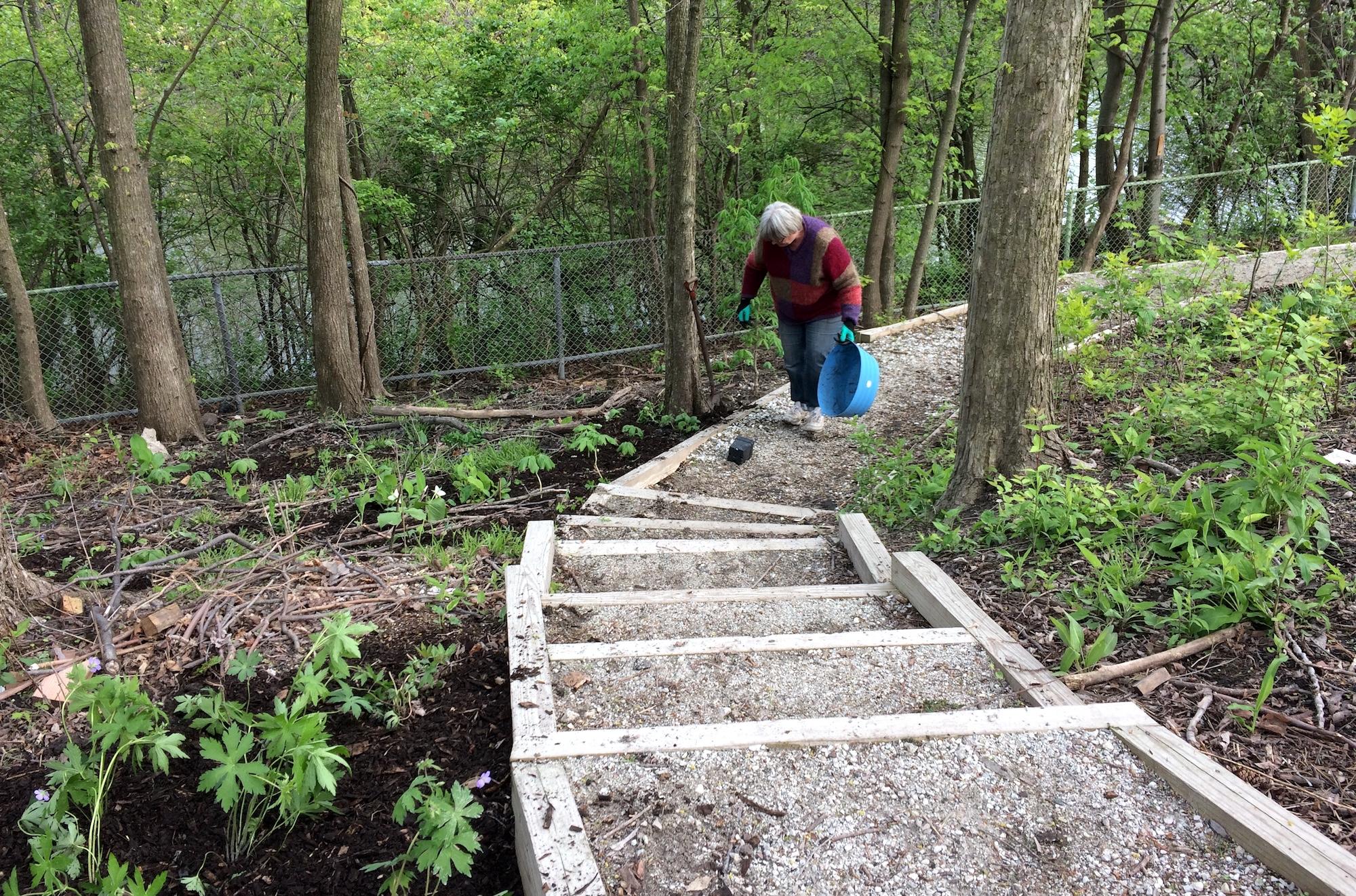 Transplanting wildflowers in May 2017