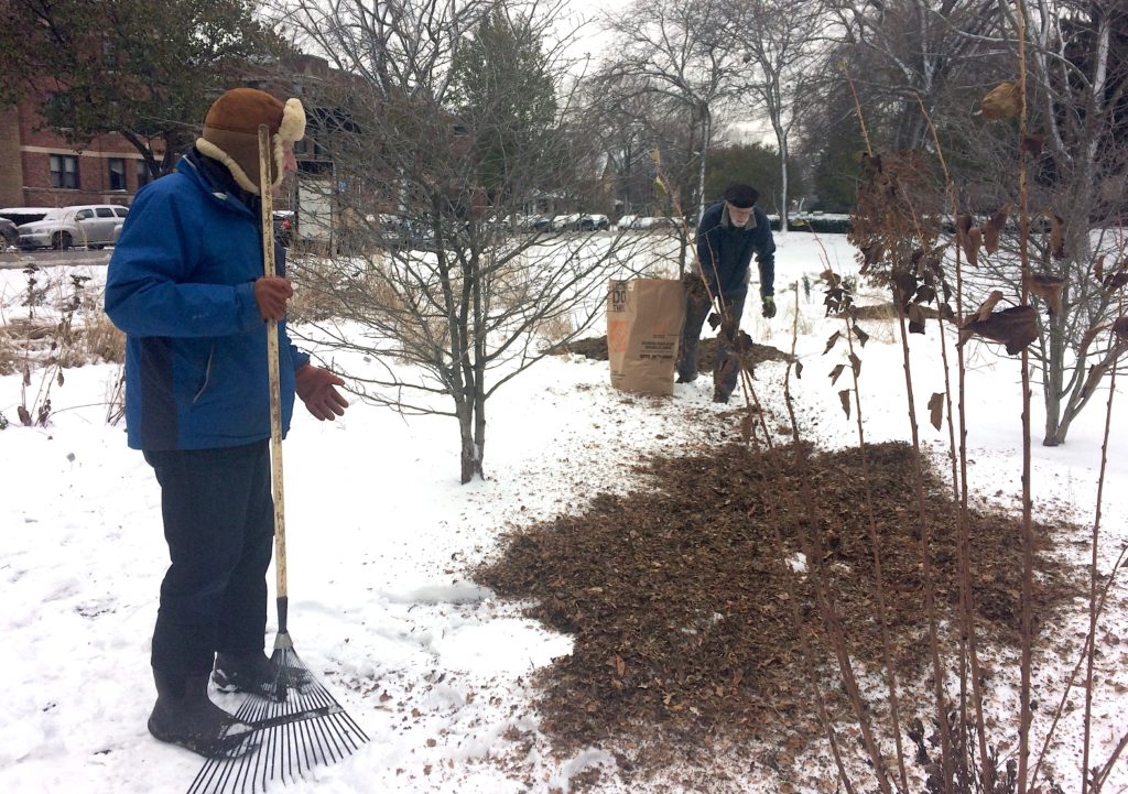 Adding a mulch of shredded leaves to the Civic Center Habitat Garden
