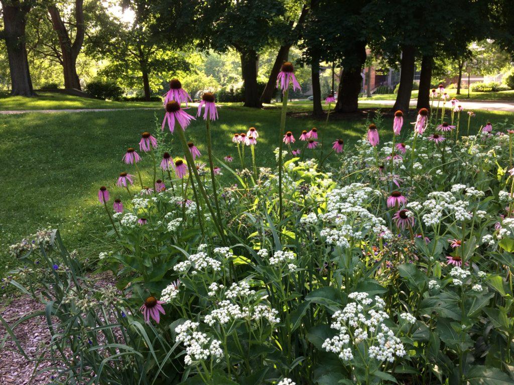 June in the Civic Center Habitat Garden