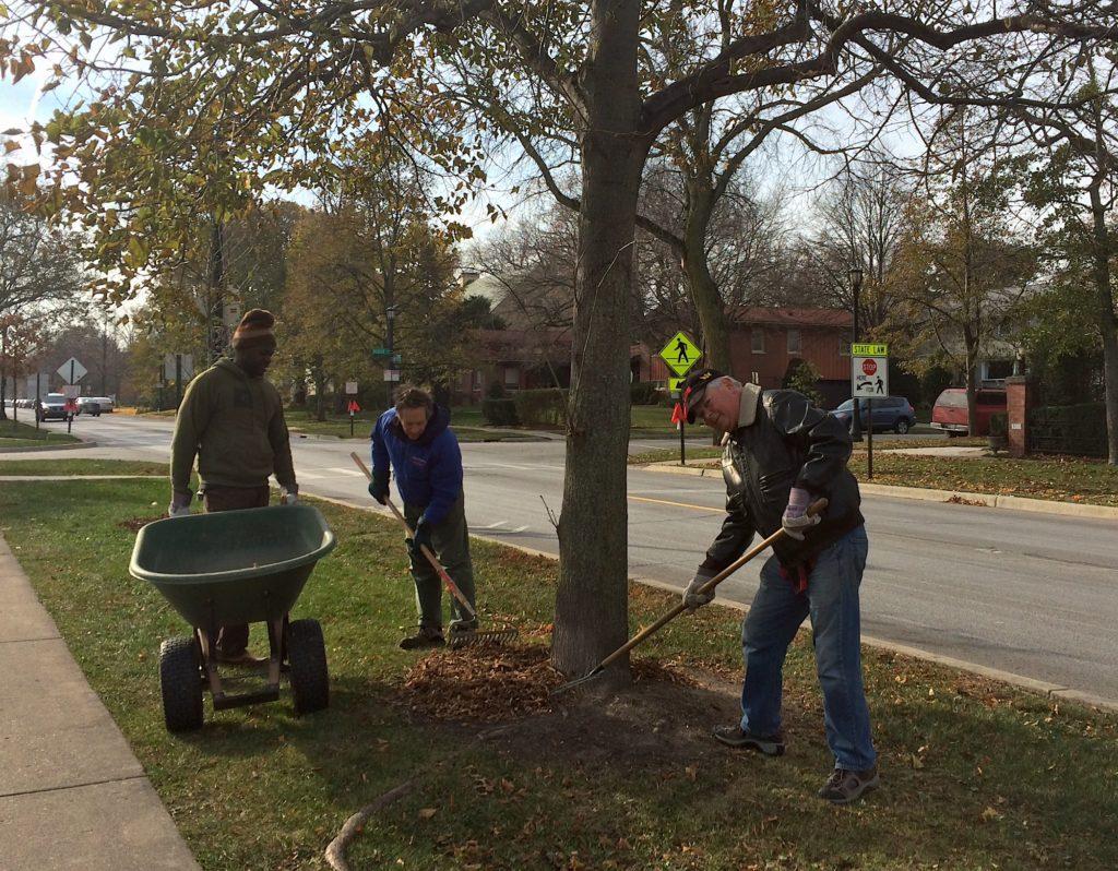 Mulching trees along Sheridan Road